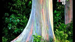 getlinkyoutube.com-5 Most Amazing Trees