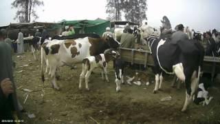 getlinkyoutube.com-جولة في سوق قطور - الجزء الثالث