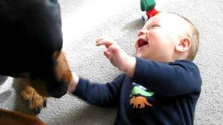 getlinkyoutube.com-Rottweiler causing a baby laugh attack