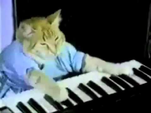 vidios engraçados de gatos vidos mais engraçados  ( Funny cats).vob
