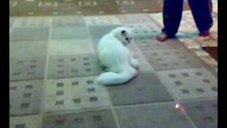 getlinkyoutube.com-قطة تلعب بالليزر.mp4