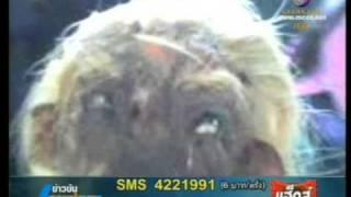 getlinkyoutube.com-ตัวประหลาด คนครึ่งงู .1