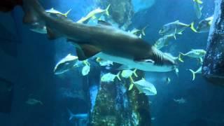 getlinkyoutube.com-SEA LIFE  Aquarium London 2013