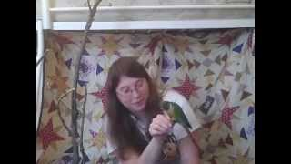 getlinkyoutube.com-How to Care For a Green Cheek Conure