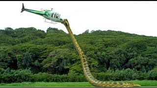 getlinkyoutube.com-a Cobra Assassina