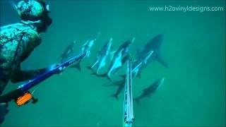 getlinkyoutube.com-Cobia Spearfishing off Bull Sharks - Summer 2016 - h2o vinyl designs