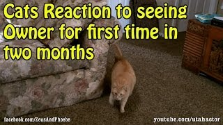 getlinkyoutube.com-Cats Reaction To Seeing Owner For First Time In Months