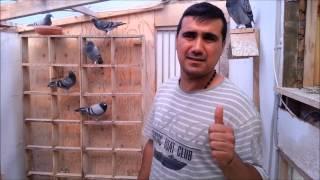 getlinkyoutube.com-حمام زاجل ليث وثائر فوزبل افراخ من 131و الفوز من260 كيلو متر 2013-08-03