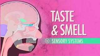 getlinkyoutube.com-Taste & Smell: Crash Course A&P #16