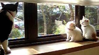 getlinkyoutube.com-保護の子猫 ひゃー 怖~い この伯父さん