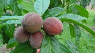 getlinkyoutube.com-العلاج بالأعشاب 20# فاكهة تعالج مرض السرطان