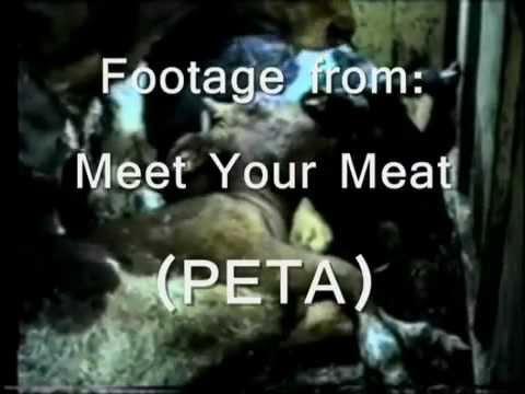Conheça o que você come - Vacas