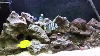 getlinkyoutube.com-Aquário marinho sem SUMP