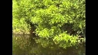"""getlinkyoutube.com-Diskus vom Rio Negro""""Dokumentation"""""""