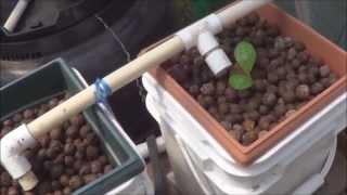 getlinkyoutube.com-Testing a Couple of Dutch Buckets in my Aquaponic Greenhouse