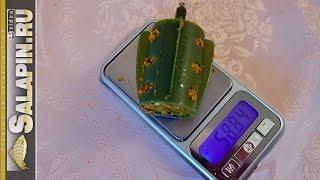 getlinkyoutube.com-Сколько весит пустота? (Про тест фидера и вес кормушки) [salapinru]