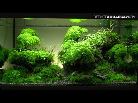Aquascaping - The Art of the Planted Aquarium 2013 XL tanks compilation