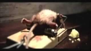 getlinkyoutube.com-Lustige Werbung mit einer Maus
