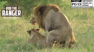 WILDlife: Wild Lion Loving