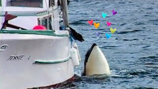 getlinkyoutube.com-Orca (killer whale) and dog - READ THE DETAILS!