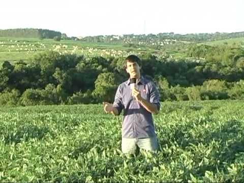Fazenda Moreira Sales