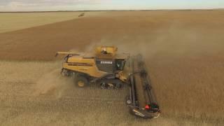 getlinkyoutube.com-Millhouse Farms Harvest 2016