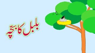 Bulbul ka Bacha (Urdu Poem) | (بلبل کا بچّہ (اردو نظم