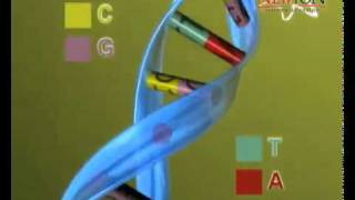 getlinkyoutube.com-ADN & ARN