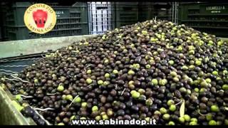 getlinkyoutube.com-Il frantoio: produzione dell'olio Sabina DOP
