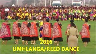 getlinkyoutube.com-Umhlanga/Reed Dance 2016 Swaziland Vlog| Swazi in South Africa YouTuber| 05 Sept 2016