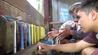 getlinkyoutube.com-สำรวจปลากัดมหาชัย#3