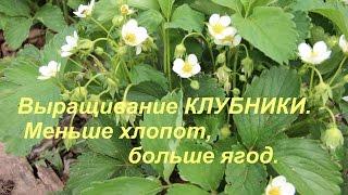 getlinkyoutube.com-Выращивание клубники. Меньше хлопот, больше ягод.