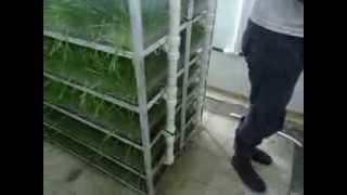 getlinkyoutube.com-الجزائـــر الزراعة المائية اسـتـنـبـات الشـعـيـر 5 Hydroponics barley breeding