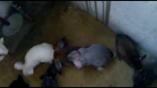 getlinkyoutube.com-ямное содержание кроликов