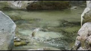 getlinkyoutube.com-フライフィッシング 渓流 イワナヒットシーン fly fishing strikes