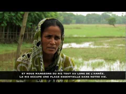 Document 8 : L'importance de la culture du riz
