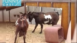 getlinkyoutube.com-거울을 본 동물들의 귀엽고 웃긴 반응들 ㅋㅋㅋ ,Animals in Mirrors Reactions Compilation