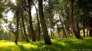 getlinkyoutube.com-Beautiful Nature Video & Relaxing Music - Echoes of the Forest (HD)