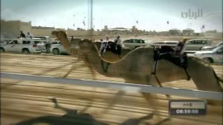 شيلة الشاعر صالح المانعه بمناسبة  مهرجان سمو أمير البلاد المفدى لسباق الهجن العربية الأصيلة