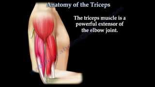 getlinkyoutube.com-Anatomy Of The Triceps - Everything You Need To Know - Dr. Nabil Ebraheim