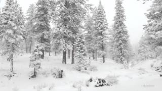 getlinkyoutube.com-Winter wonderland in 4K resolution.
