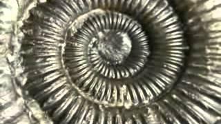 getlinkyoutube.com-Золотое сечение - Божественная мера красоты