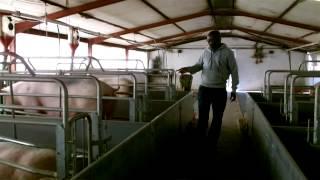 getlinkyoutube.com-Life Story of Maano Ramadwa MPEG 4