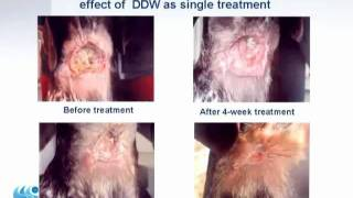 10 (1of2) Deuterium Depleted Water (DDW) anti cancer effect