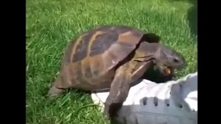 getlinkyoutube.com-Turtle Remix Compilation