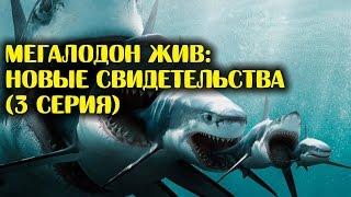 getlinkyoutube.com-МЕГАЛОДОН ЖИВ: новые свидетельства (3 серия)