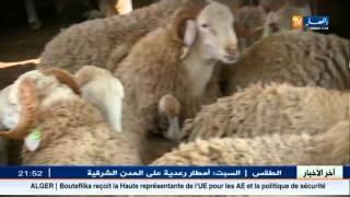 "getlinkyoutube.com-جزائريون.. موقع ""واد كنيس"" ينافس أسواق الماشية"