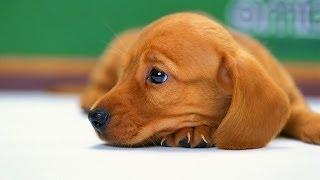 getlinkyoutube.com-Top 10 Most Dangerous People Foods For Dogs