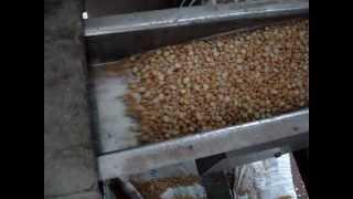 getlinkyoutube.com-Besan Grinding Plant.MPG