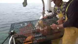 getlinkyoutube.com-Lobster catching and cooking in New England
